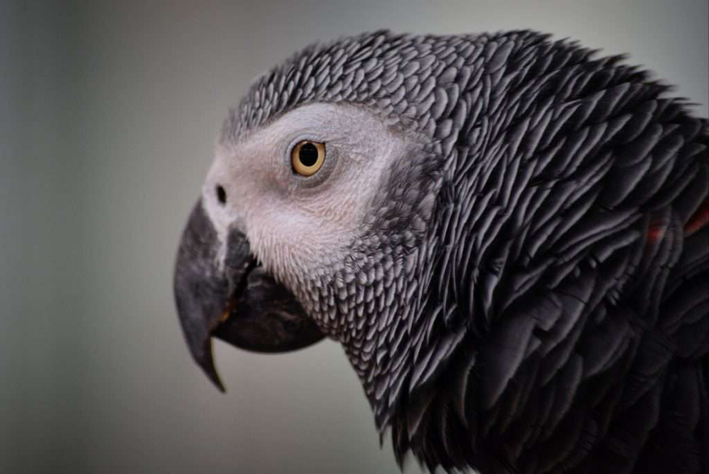 parrot-1293324_1920