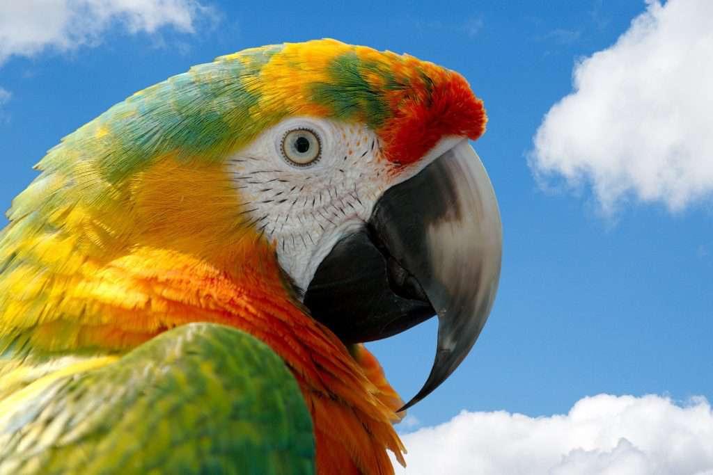 parrot-2818926_1920