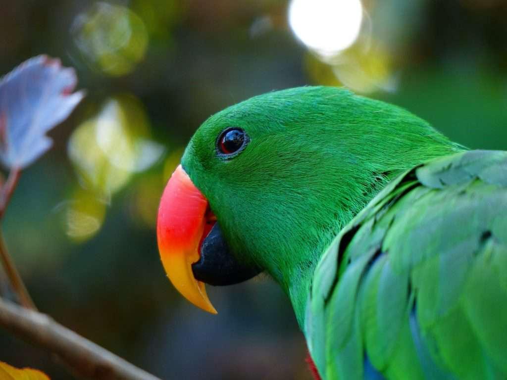parrot-406668_1920
